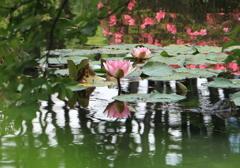 池リフレクション