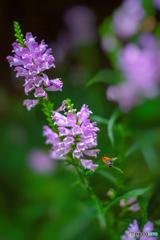 蜂を呼ぶ花