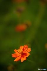 一輪の花の奥