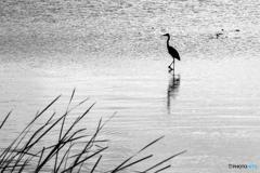 時を待つ鳥