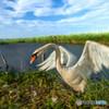 青い空 白い翼