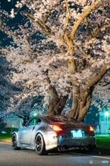 夜桜 FAIRLADY Z