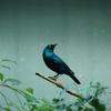 A tiny bird colored in dark green