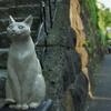いらっしゃい 谷中の猫の像