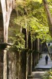 秋の水路閣