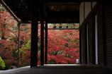濡れ縁から見える紅葉