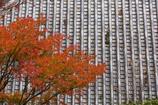小雨降る三滝寺