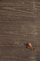 歩道に、枯葉が1枚。