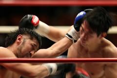 boxers #11