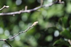 春の芽(2)