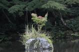 秋色ほんのり(3)