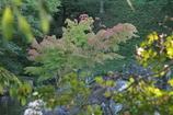 秋色ほんのり(1)