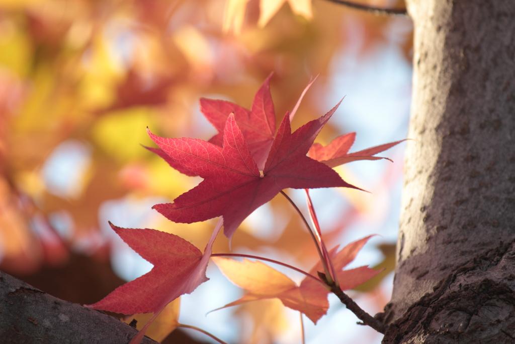 秋に迷い込んで(1)