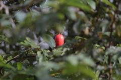 秋の実り(2)