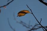 人生は一片の木の葉のように