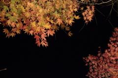 夜を彩る(2)