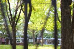 垣根から新緑を望む