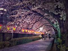 目黒川緑道の夜桜 t