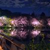 ボート池の夜桜