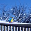 雪の日の翡翠 t