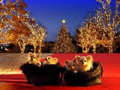 ワンちゃんのクリスマス