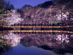 夢の架け橋 t