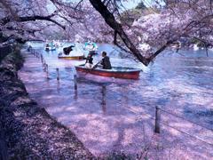 花筏とボート t