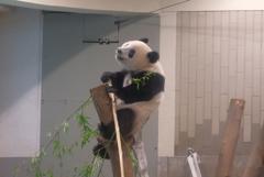 2018.07.14 上野動物園 シャンシャン その5
