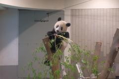 2018.07.14 上野動物園 シャンシャン その8