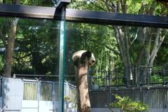 2018.04.22 上野動物園 シャンシャン その3