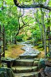 春散歩 新緑への入口