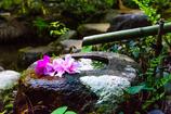 春散歩 春の生花