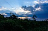 ジャングルの夕日