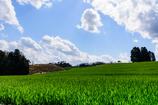 若草輝く 丘の夢牧場