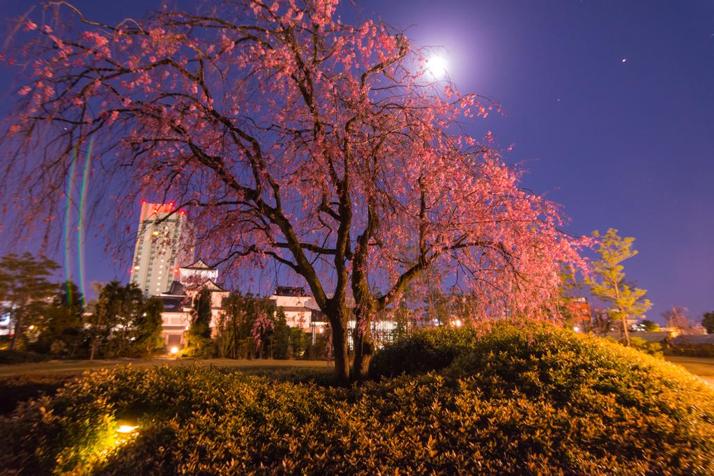 富山城址 荒城の月