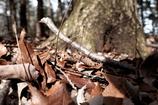 森の中にも春の陽射し