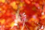 秋色に染まって