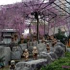 APPLE iPhone 5で撮影した(20140904_枝垂れ桜と十六羅漢)の写真(画像)