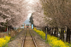 真岡鐵道 さくらのトンネル