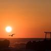 日の出と海鳥