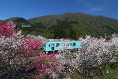 花桃トンネル