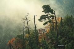 峠の立ち木