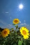 太陽と一緒