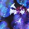 パープル バブル