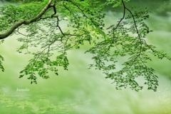 涼やかな緑