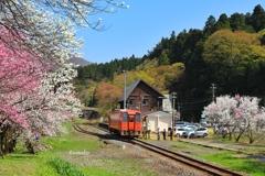 花桃と赤い汽車