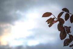 雲と枯れ葉