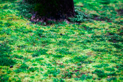 greens08