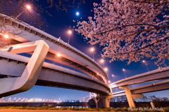 Junction 8th ~ 桜の季節、また来年...