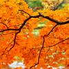 さよなら秋。北国、今年最後の彩り